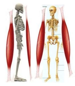 sadam-chaines-musculaires2